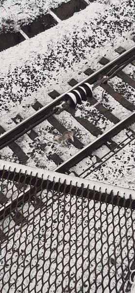 На Украине мужчина скинул собачку с 10-метровой высоты прямо на рельсы Женщина, которая проходила мимо, спасла малыша и передала ветеринарам.На днях злоумышленника должны были судить, но на