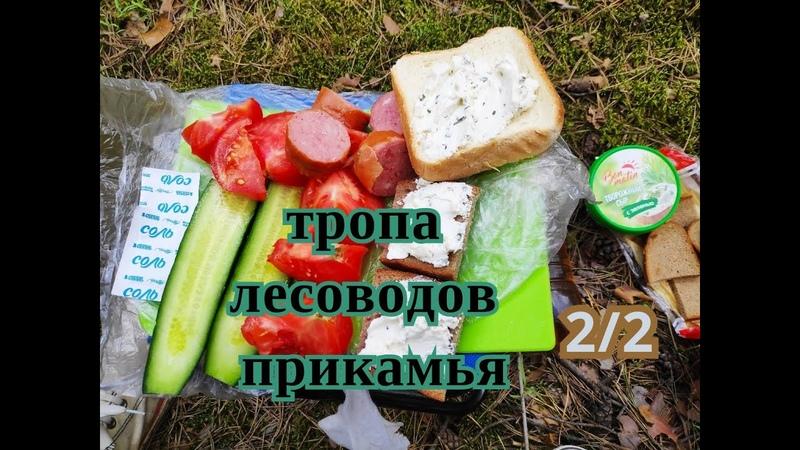 Тропа Лесоводов Прикамья (22) 29 мая 2020