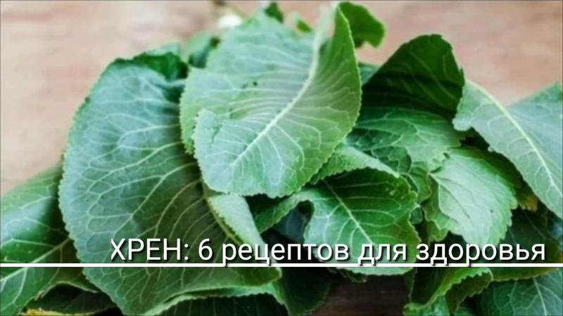 Листья хрена — отменное лекарство 6 рецептов, которые заменят аптеку!