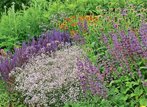 САМЫЕ АРОМАТНЫЕ ЦВЕТЫ Есть цветы красивые. А есть ароматные. Как правило, два этих свойства редко сочетаются в одном цветке. Даже у роз запах не столь насыщенный, как, к примеру, у неброской