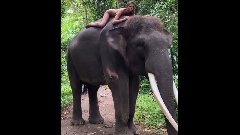Скандал Алеся Каф Кафельникова Avant Авант на слоне на Бали