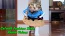 Catwalk Cats Fashion Show So Funny Cats Jhakaas Abuba Videos