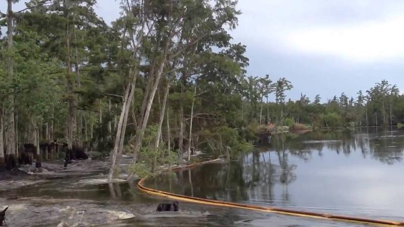 Карстовая воронка заглатывает деревья Sinkhole swallows trees