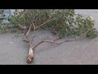 Штормовой ветер в Тюмени