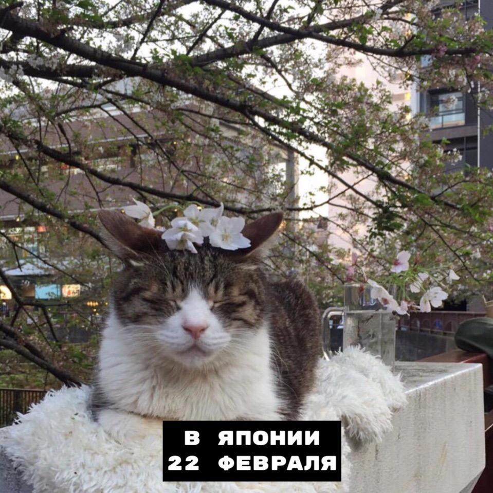 Когда празднуются дни котиков