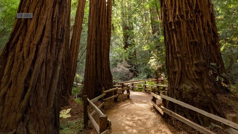 Peaceful Instrumental Relaxing Music Meditation Natue Music Big Sur Redwoods by Tim Janis