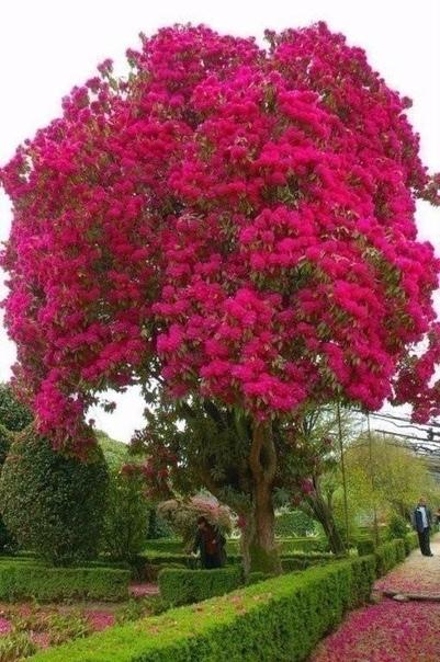 Причудливые деревья (источник: gofazenda)