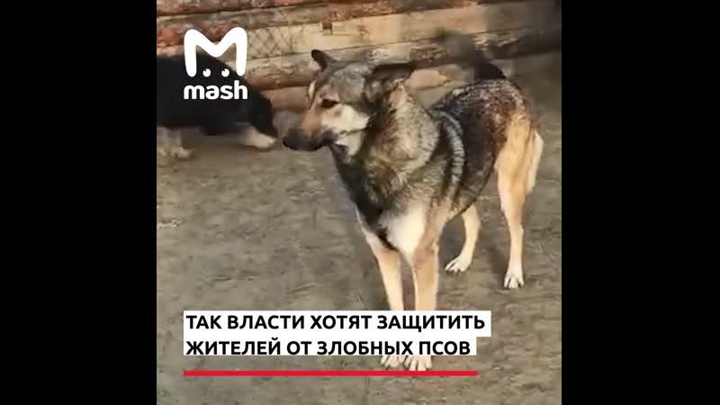 В Бурятии объявили бродячих собак вне закона