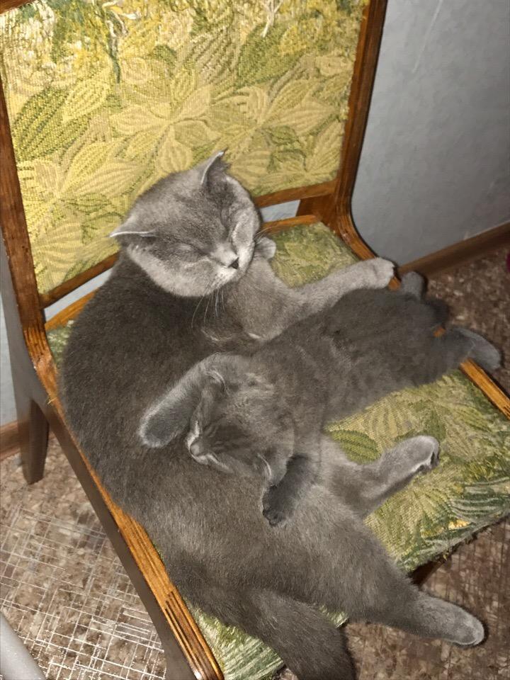 Боня и котёнок Барон)))