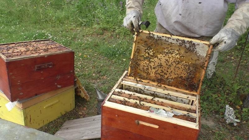 Использование бродячих роев Обединяем получаем мед маточное молочко выводим маток