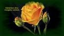 Kívánok boldog Nőnapot - Aranyosi Ervin
