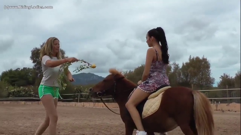 Ponyboy ale Persuasion