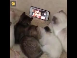 Котята смотрят мультик