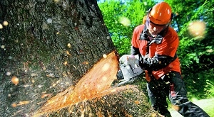 Браконьер наказан за незаконную рубку леса