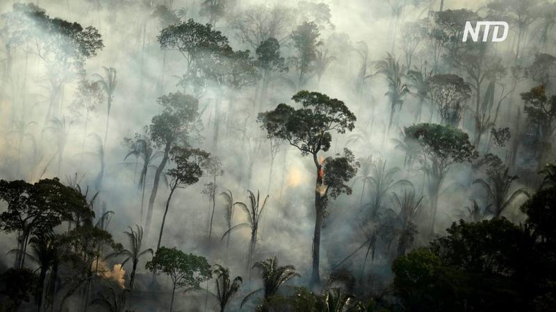 Леса бразильской Амазонии горят интенсивнее чем в тот же период в прошлом году