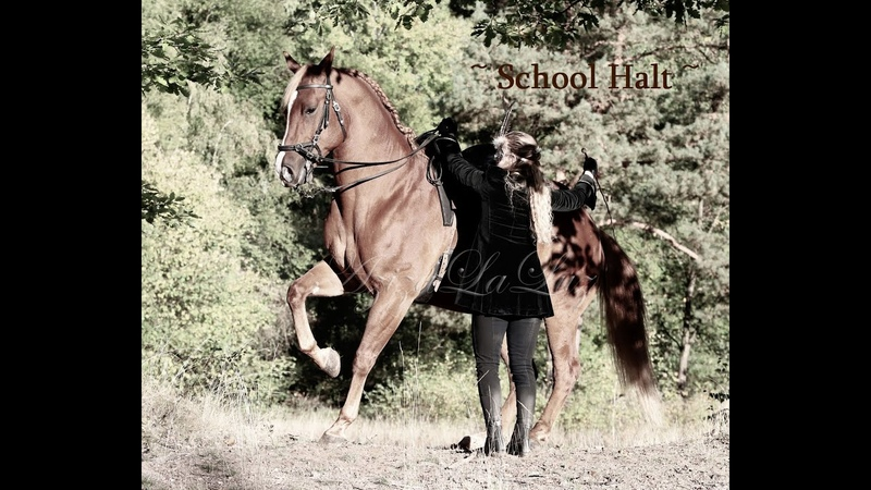 SCHOOL HALT - First steps and tips for advanced horses