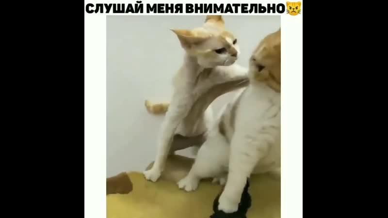 Походу пухляш в одного съел весь обед))