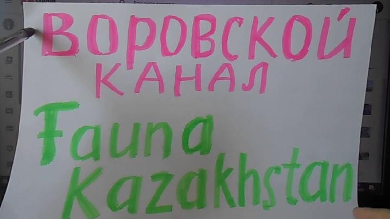 Воровской КАНАЛ Fauna Kazakhstan