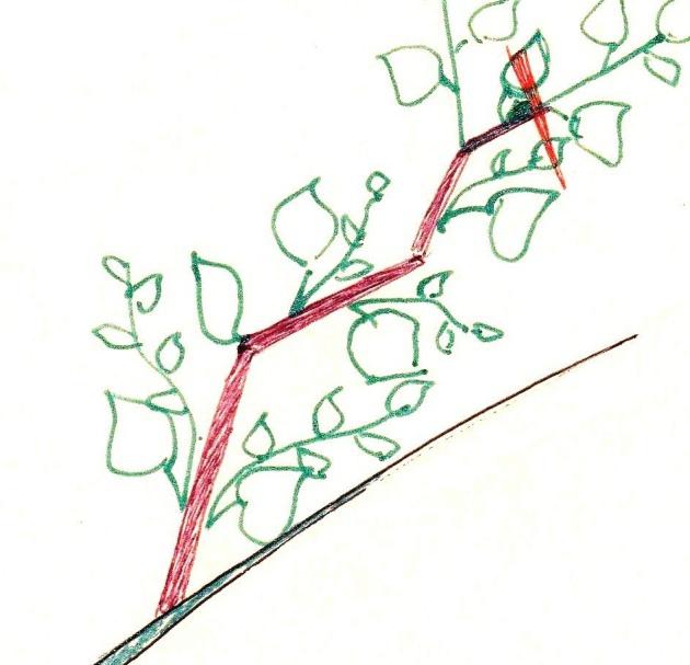 Как сделать Чудо-Дерево, забитое плодами., изображение №5