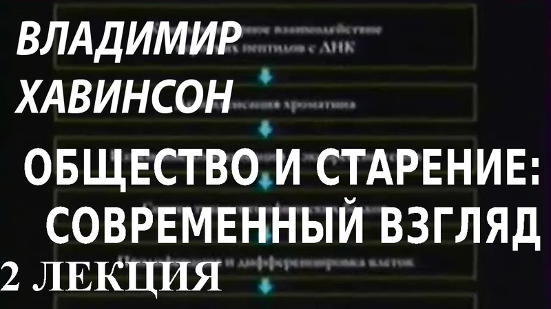 ACADEMIA Владимир Хавинсон Общество и старение современный взгляд 2 лекция Канал Культура
