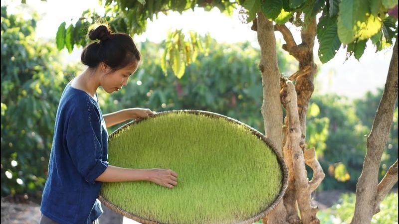 Đường Mạch Nha Từ Mầm Lúa | The life with malt