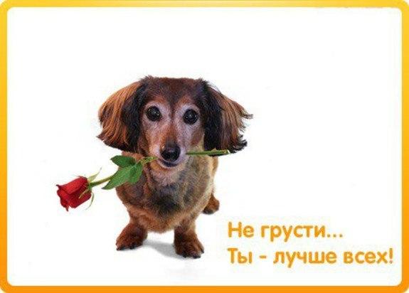 открытка не плачь моя хорошая очень