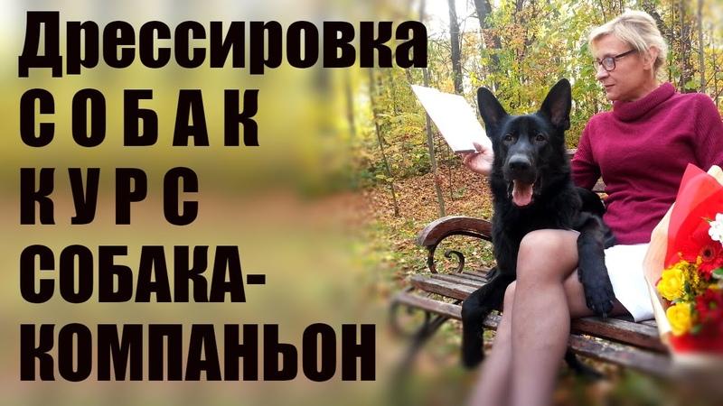 Дрессировка собак Курс СОБАКА КОМПАНЬОН город Ижевск