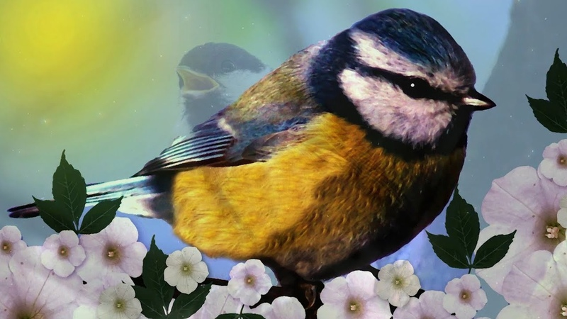 Peaceful Relaxing Instrumental Music Meditation Calm music Meadow Song Birds by Tim Janis