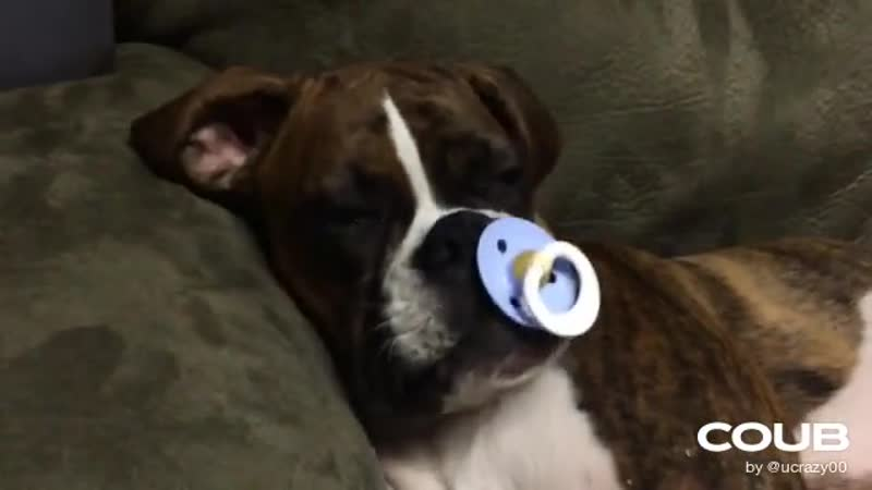 Princess Leia loves her pacifier.