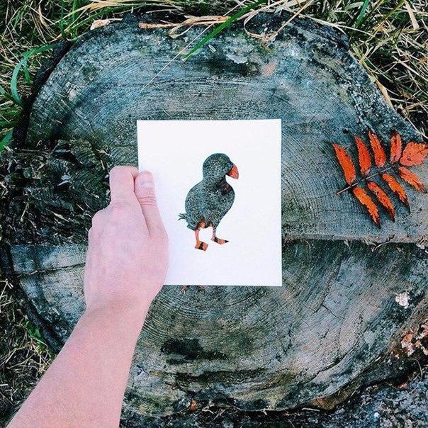 НЕОБЫЧНОЕ «РИСОВАНИЕ» Художник Николай Толстых придумал оригинальный способ «рисовать» животных и птиц, используя для этого не холст и краски, а бумажный трафарет и живую природу. Предложите