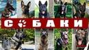Собаки на службе полиции США Флорида К 9 в деле выпуск 4