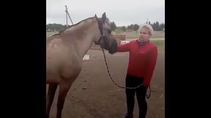В Перми родители детей с ДЦП оплатили лечение лошадей