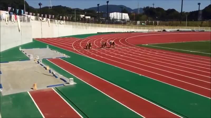 Бег среди сумоистов не самый популярный вид спорта. Но выглядит просто отменно!