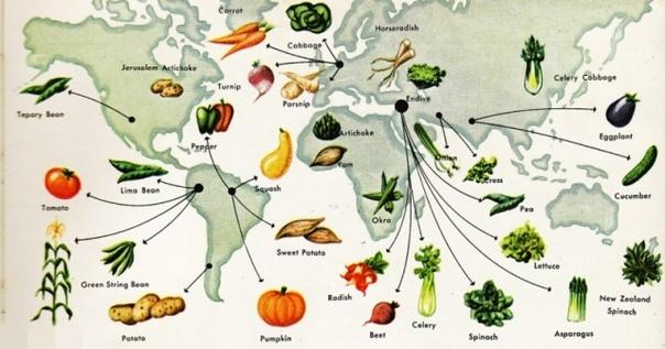 История каждого овоща на вашем столе Происхождение видов История овощей начинается на заре современного человечества, когда охотники-собиратели покинули Африку и начали заселять всю планету.