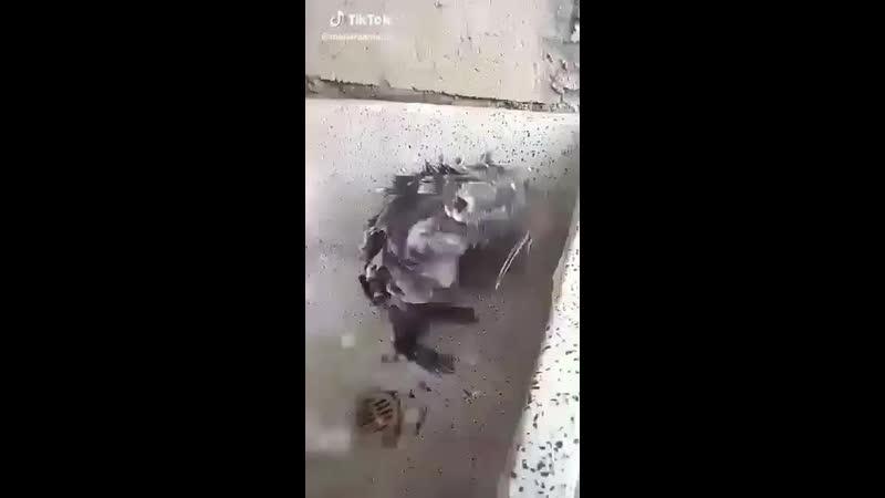 Video-1558586796.mp4