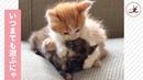 子猫たちの無邪気な時間😽 じゃれ合う姿が可愛いすぎる…💕【PECO TV】