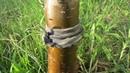 Как защитить дерево от муравьев копеечный способ