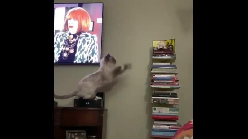 Так хочется допрыгнуть хорошее настроение котик домашнее видео кошка кот киса стопка попытка прыжка когда у тебя лапки
