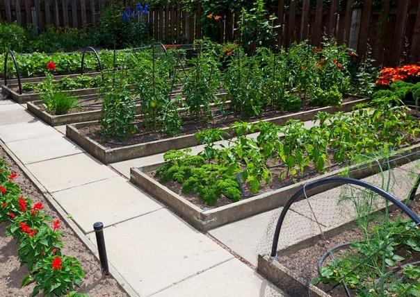 Как правильно расположить грядки на участке для высокой урожайности
