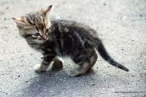 ПОСЛЕДНИЙ РАЗГОВОР ПО ДУШАМ Нет, вот ты мне скажи-настаивал большой, старый, серый кот. Почему ты отправил вон тому мужику маленькое сердечко Он же прошел мимо котёнка. Даже не погладил его и не