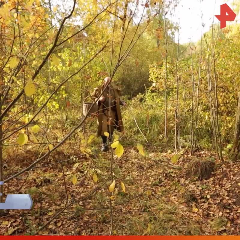 Тимофей Баженов о грибах / #РЕНТВ
