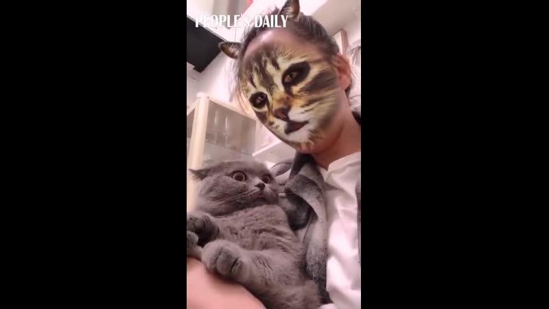 When cats meet cat filters...