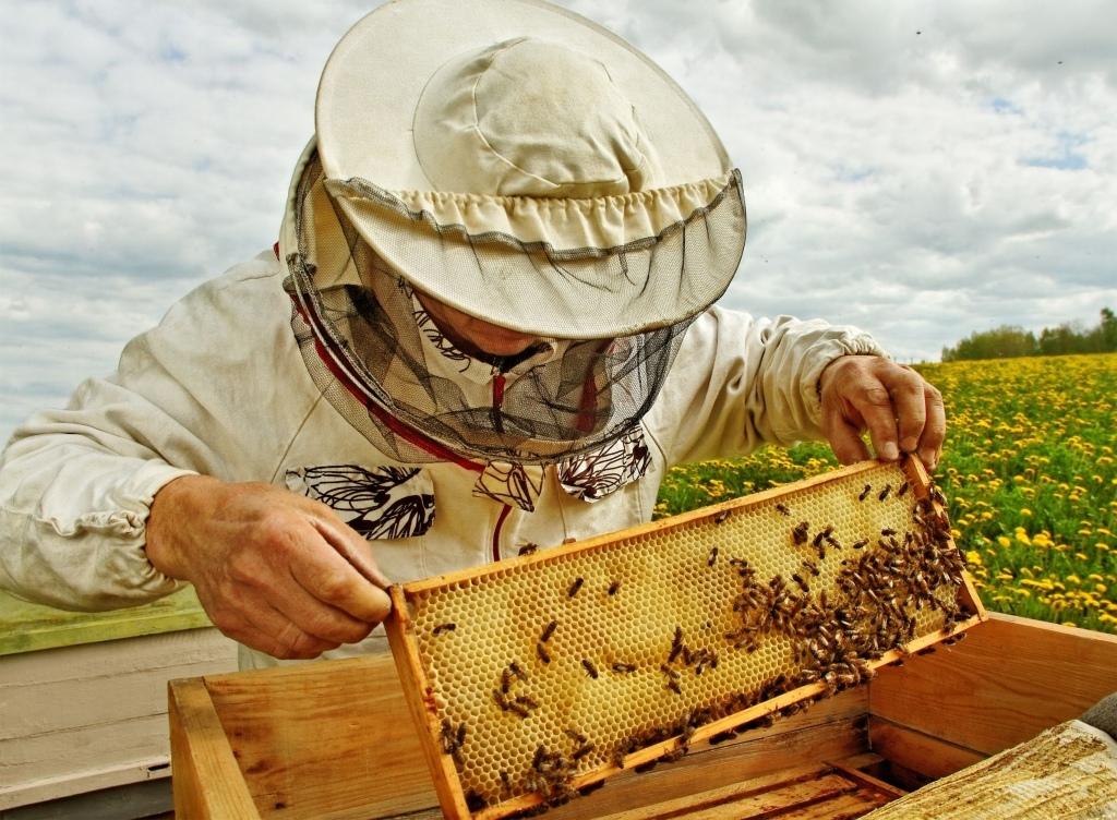 Пчеловод из Дмитровского округа получил грант на сумму 1,5 млн рублей