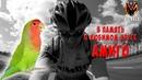 В память о любимом попугае Амиго