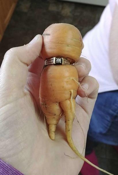 Женщина потеряла в огороде кольцо 13 лет назад. И собирая урожай моркови, не поверила своим глазам!