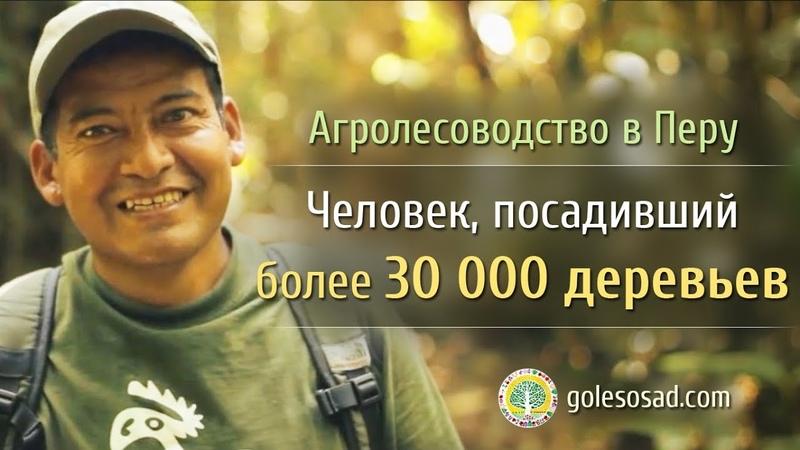 Агролесоводство в Перу Человек посадивший 30 000 деревьев