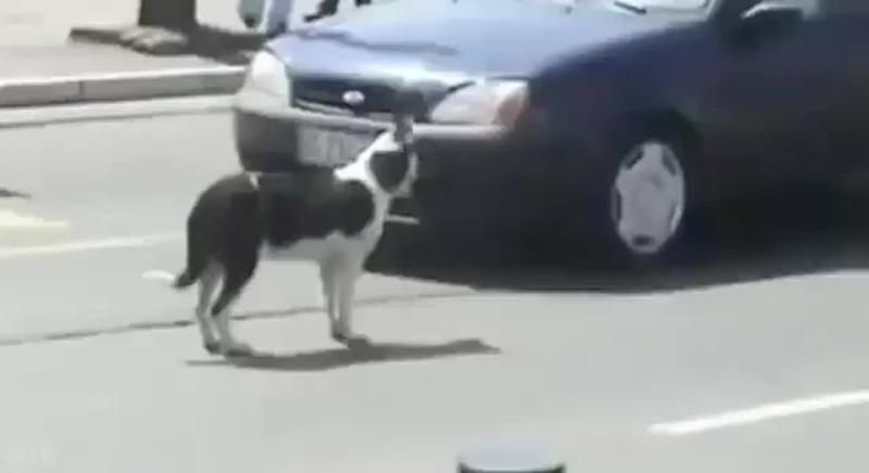 Гудет банде собак не надо