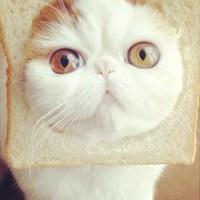 Фотография профиля Летния Дождика ВКонтакте