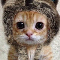 Фотография профиля Максима Карпова ВКонтакте