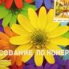 Risovanie-Po-Nomeram Krasnoyarsk